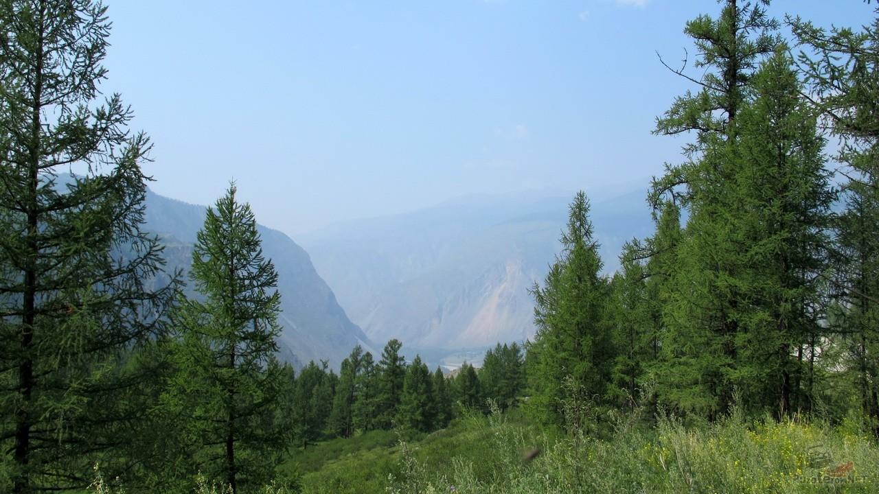 Природа республики Алтай, дорога к Телецкому озеру