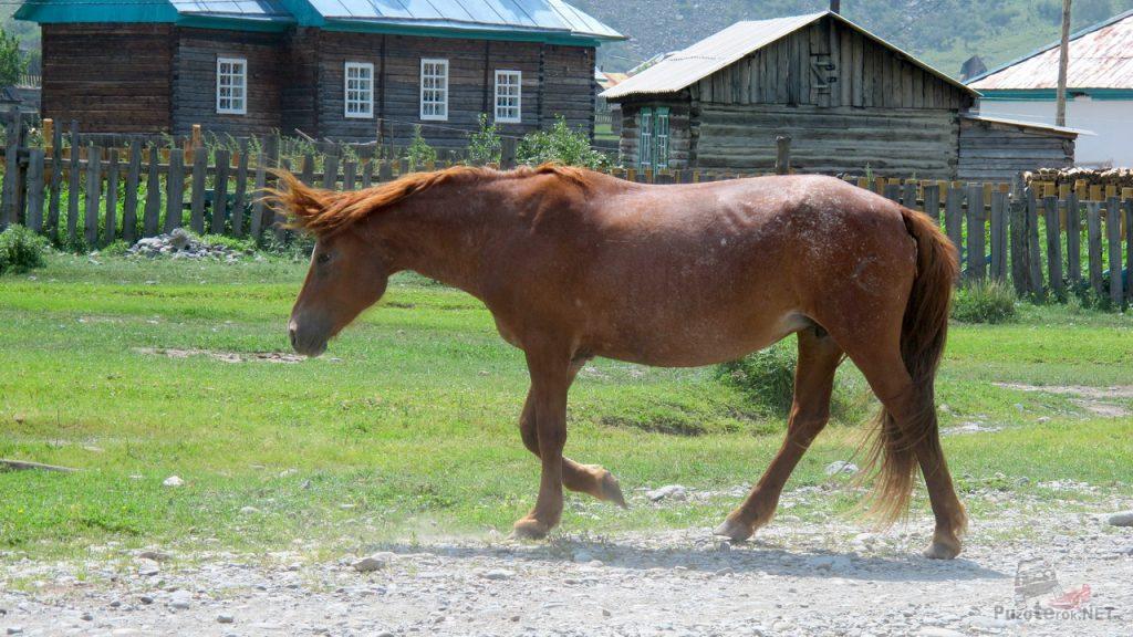 Конь убежал при приближении к нему