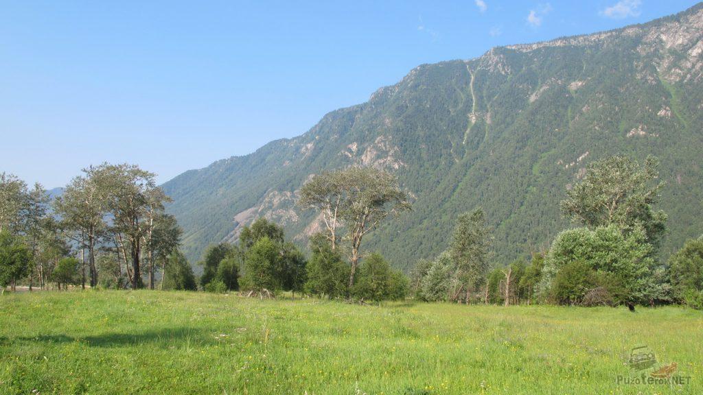 Природа Алтая в долине реки Чулышман