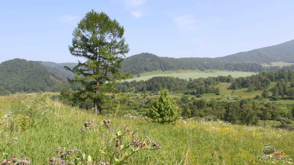 Природа республики Алтай