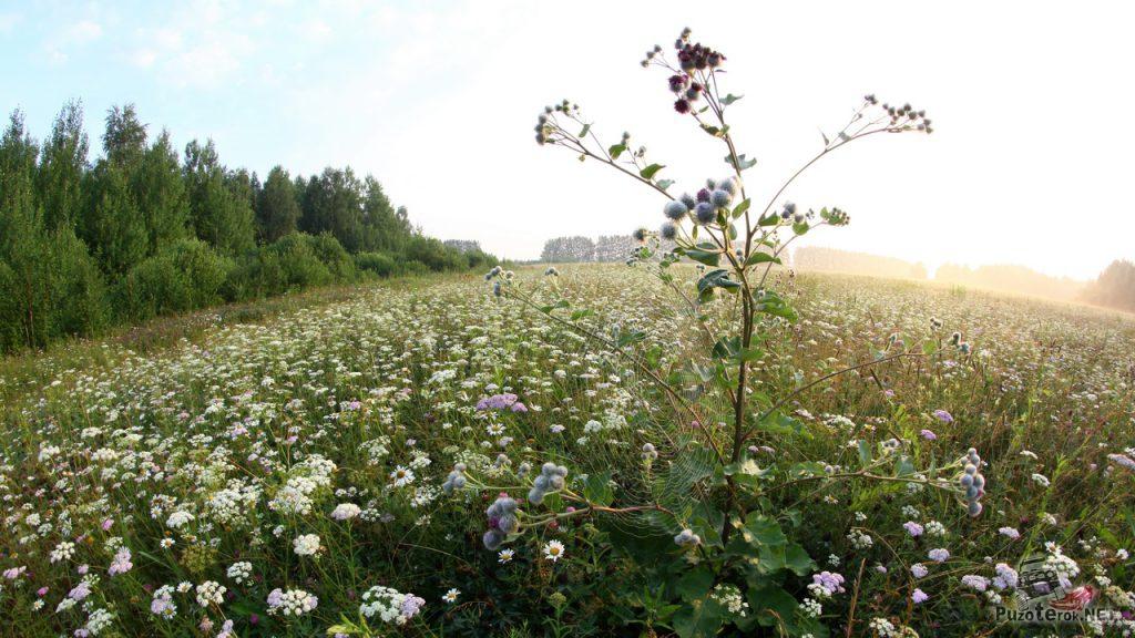 Красивая природа тюменской области