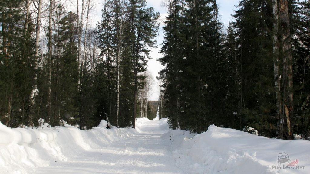 Зимник на Томск прямой как стрела