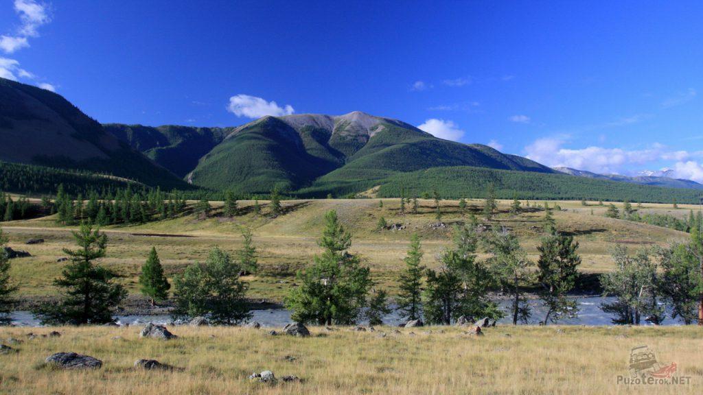 Природа Алтая, возле села Курай