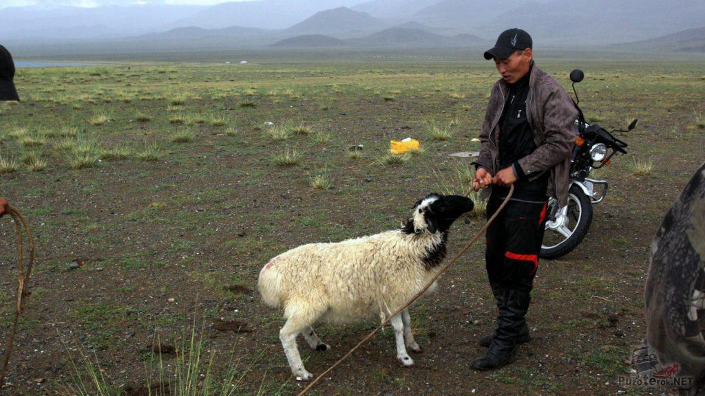Покупка барана в Монголии