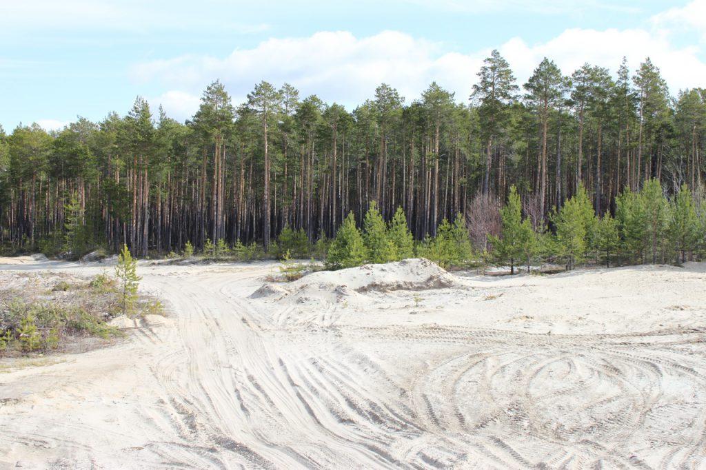 Фото лесные песчаные дороги сургутского района