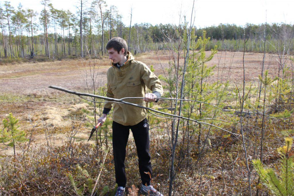 Прорубание просеки в лесу