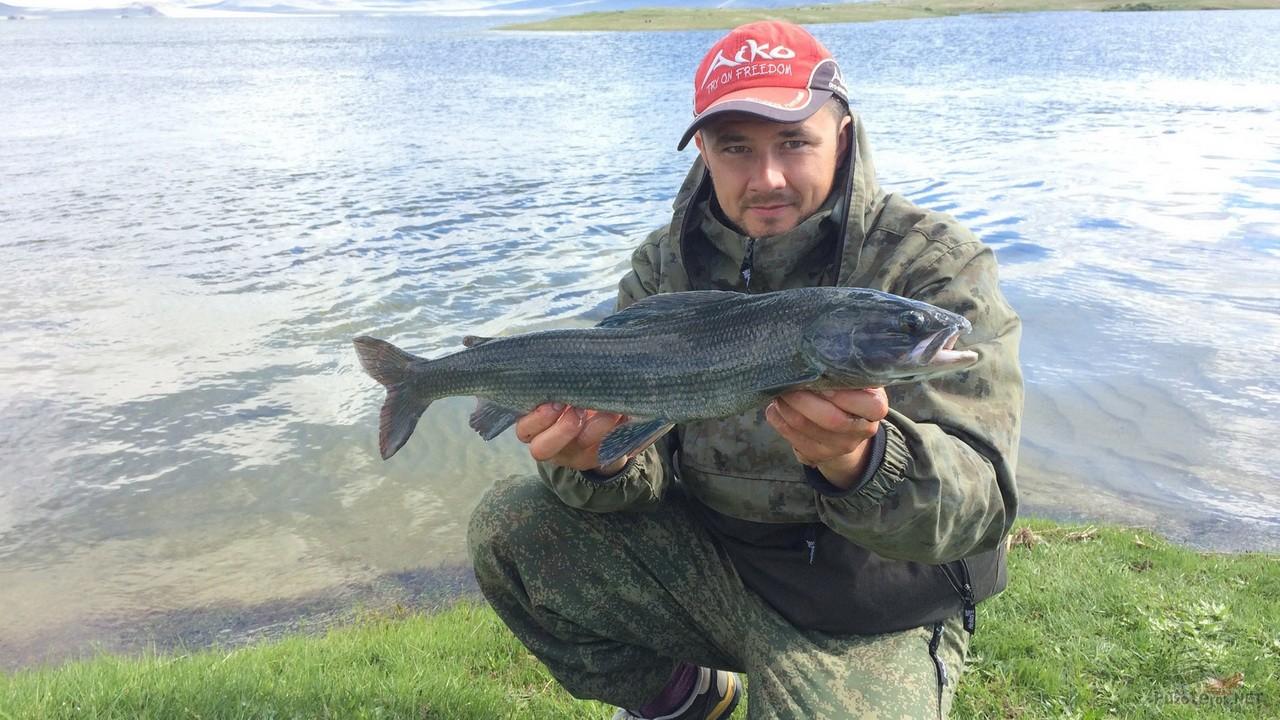 Монгольский Хариус, рыбалка в Монголии
