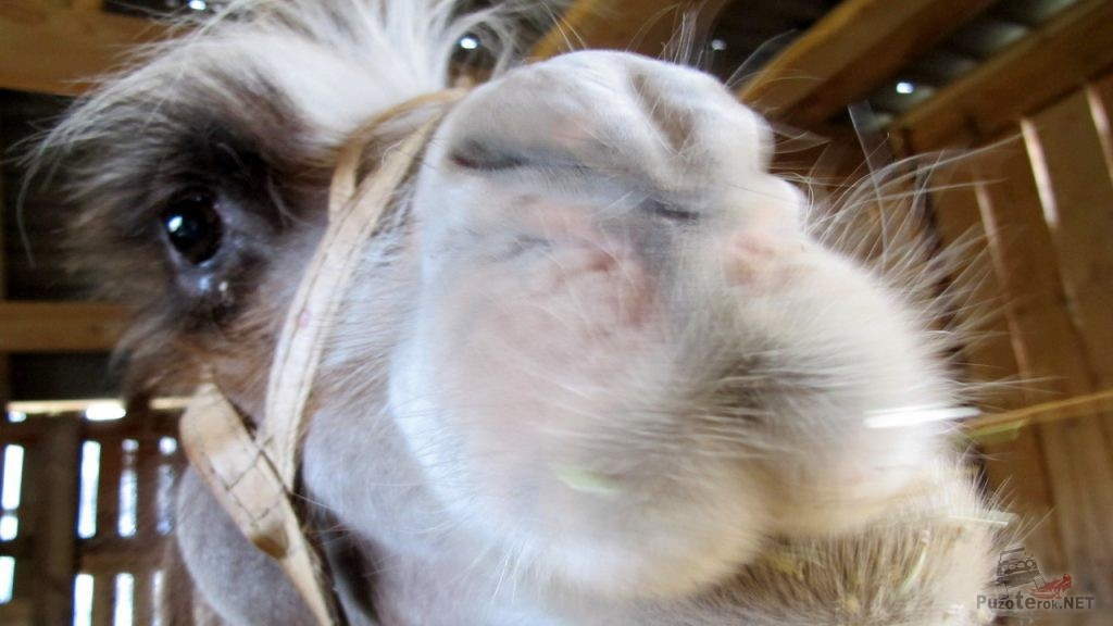 Верблюд на турбазе