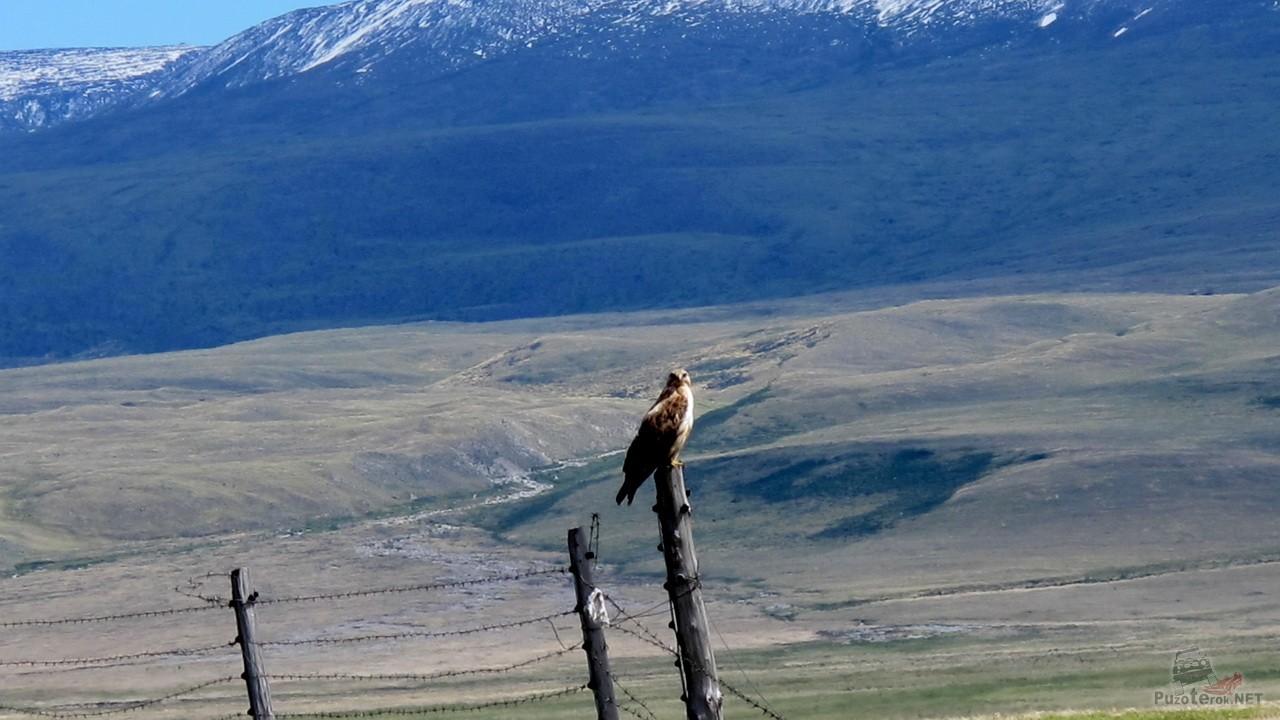 Орел на столбе
