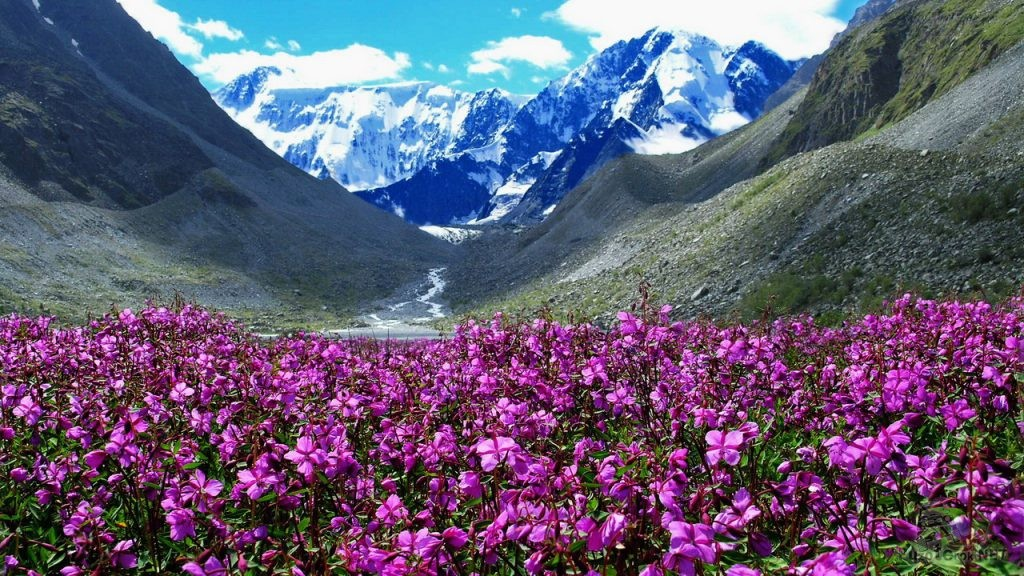 Гора Белуха, Алтай