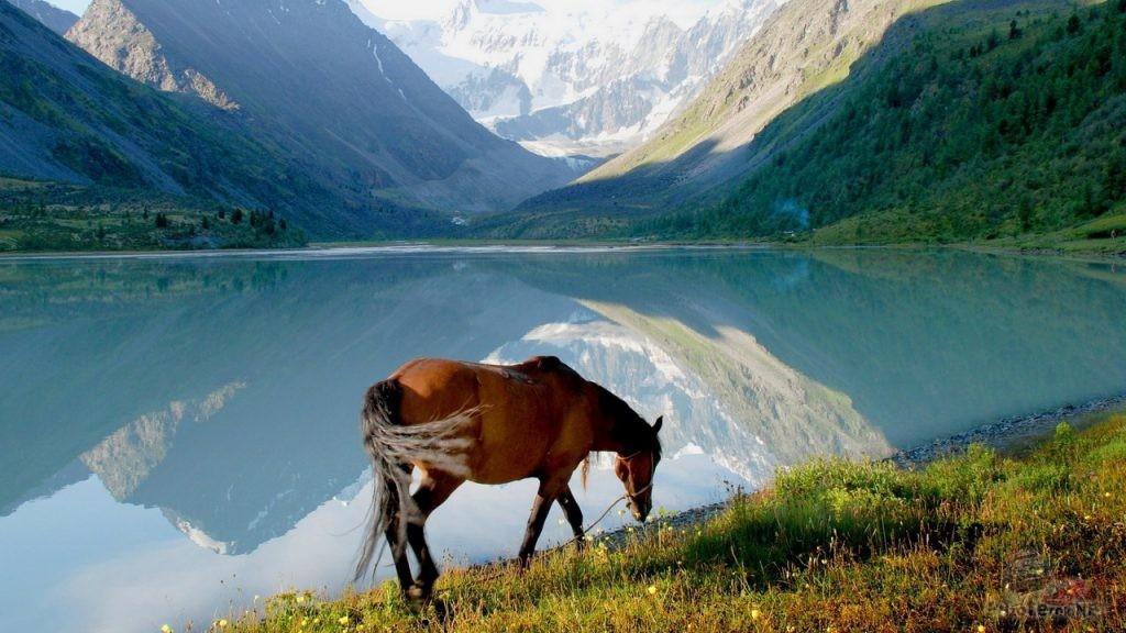 Лошадь на берегу озера, Алтай