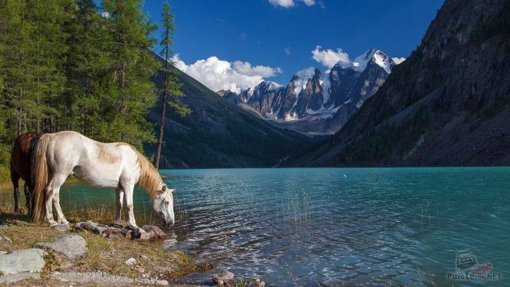 Лошади на берегу Шавлинского озера