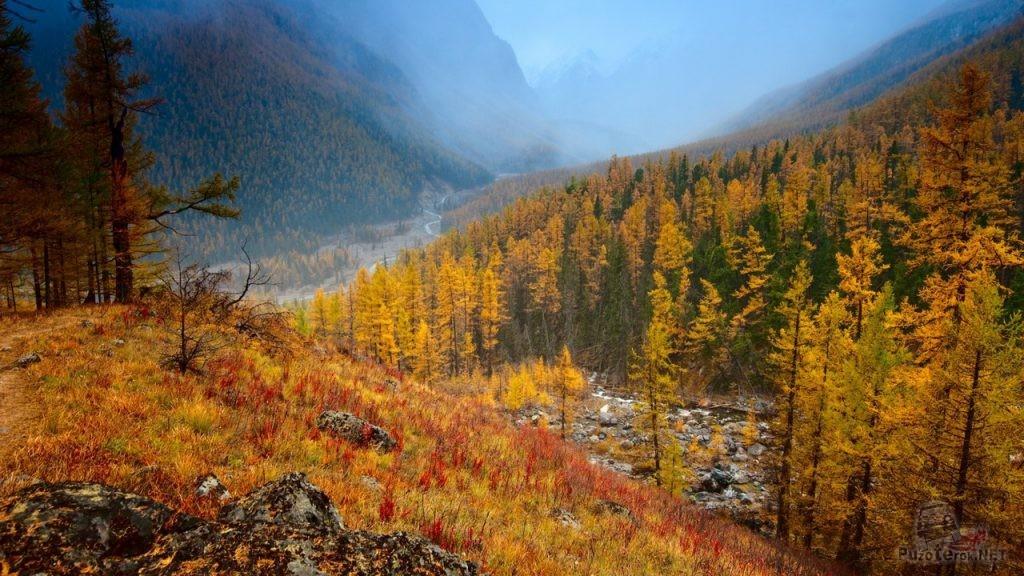 Золото осени в горах Алтая