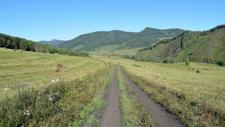 Дорога на покос на Алтае
