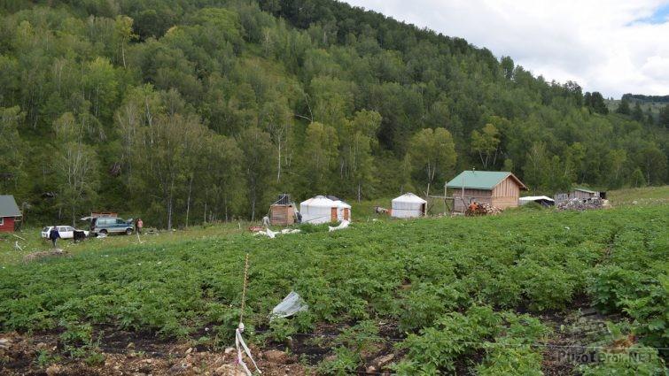 Огород и юрты на ферме