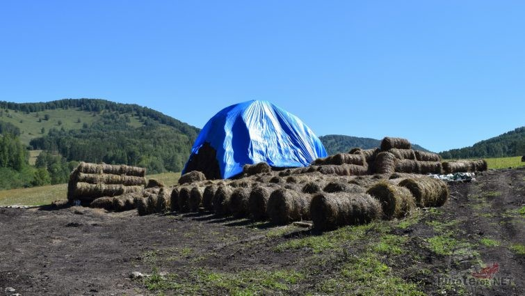 Заготовка сена на Алтае