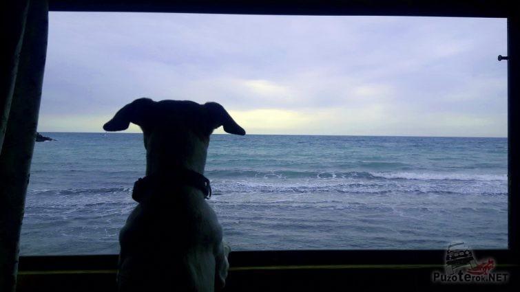 Впервые в жизни пес увидел море с которого долго не сводил глаз
