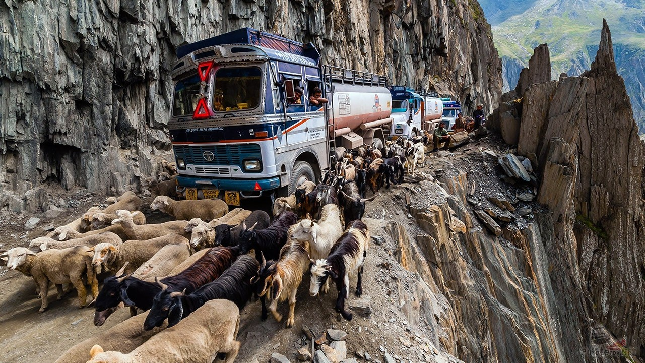 Козы и бензовозы на одном из самых опасных горных перевалов — Зоджи Ла в Гималаях
