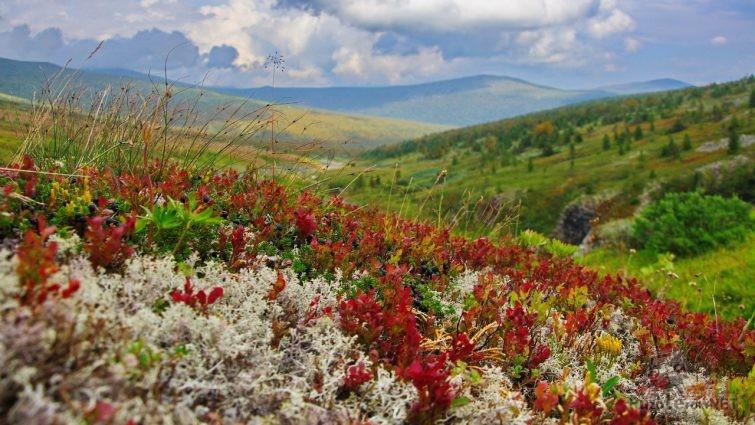 Краски Северного Урала