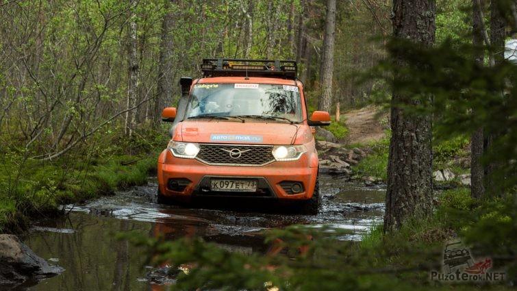 Оранжевый патриот в луже на лесной дороге