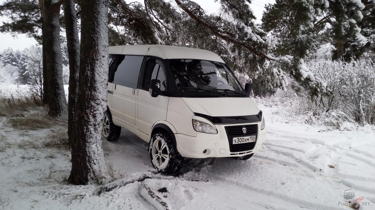 Белый Соболь в красивом зимнем лесу