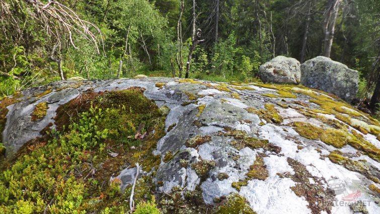 Древние камени покрыты мхом