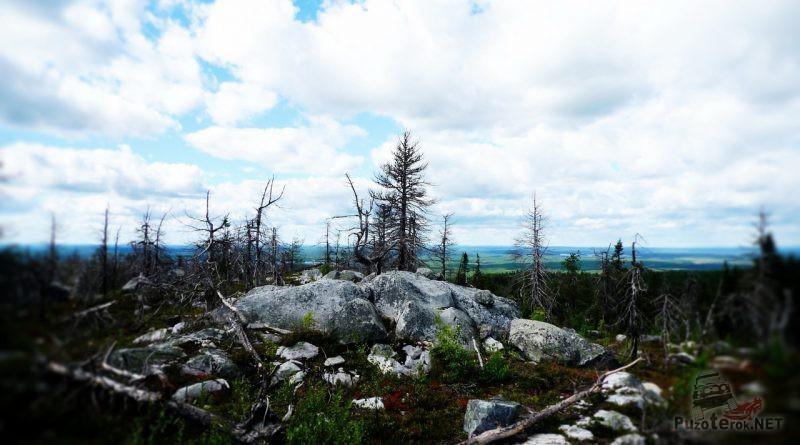 Камни и умершие деревья Воттоваары