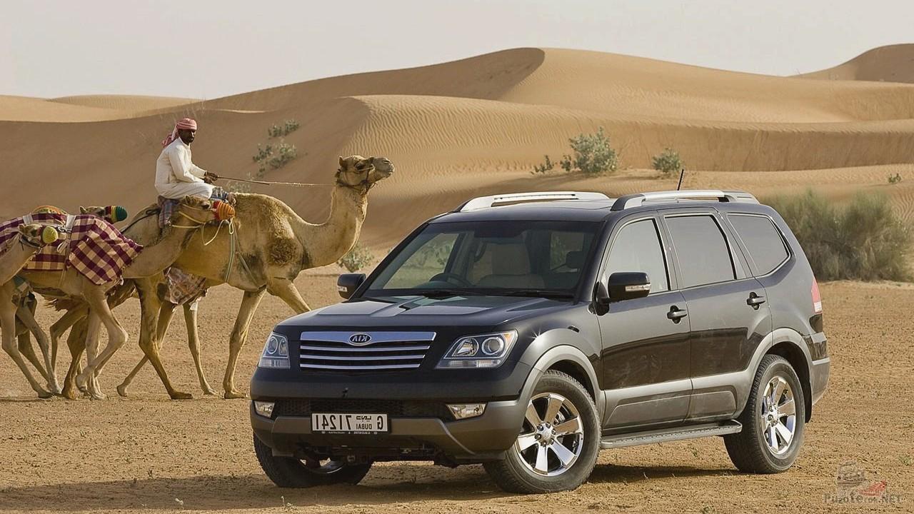 Мохав рядом с верблюдами в пустыне