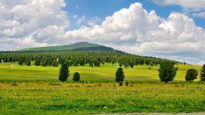 Цветущий луг в горах на перевале