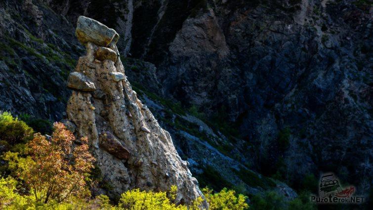 Алтайский каменный гриб