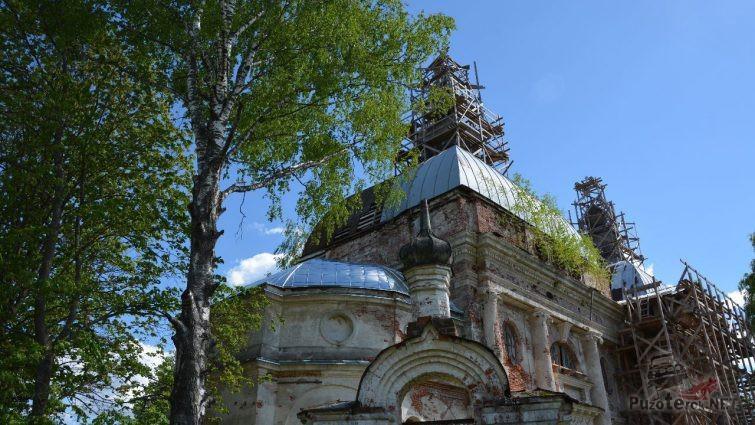 Берёза на фоне руин
