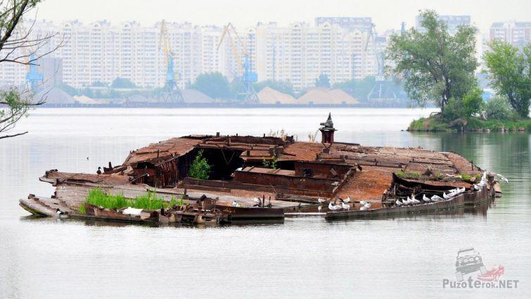 Чайки на затонувшем корабле