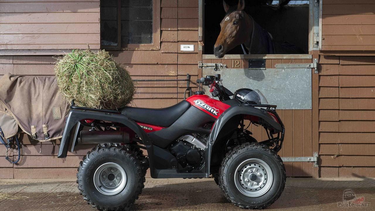 Квадроцикл Suzuki Ozark 250 у конюшни
