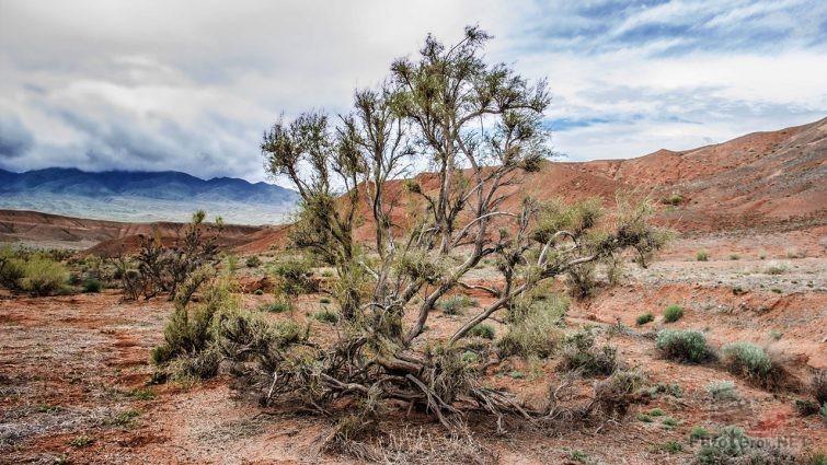 Пустынная колючка на фоне красноглиняных гор