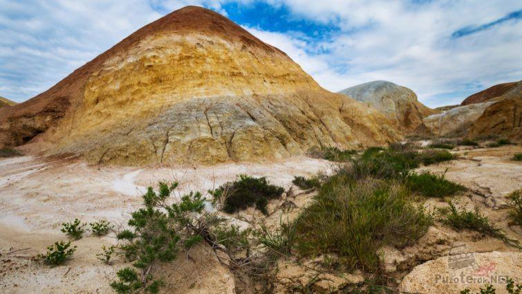 Пустынная растительность среди глинистых скал