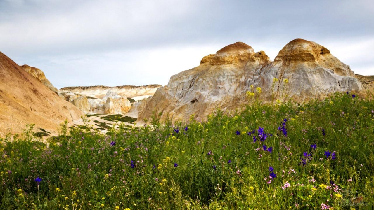 Цветущий луг перед спуском в ущелье