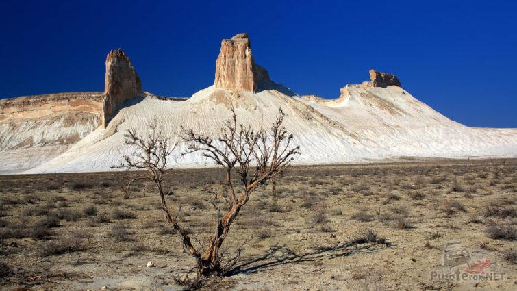 Чахлое деревце на фоне скал