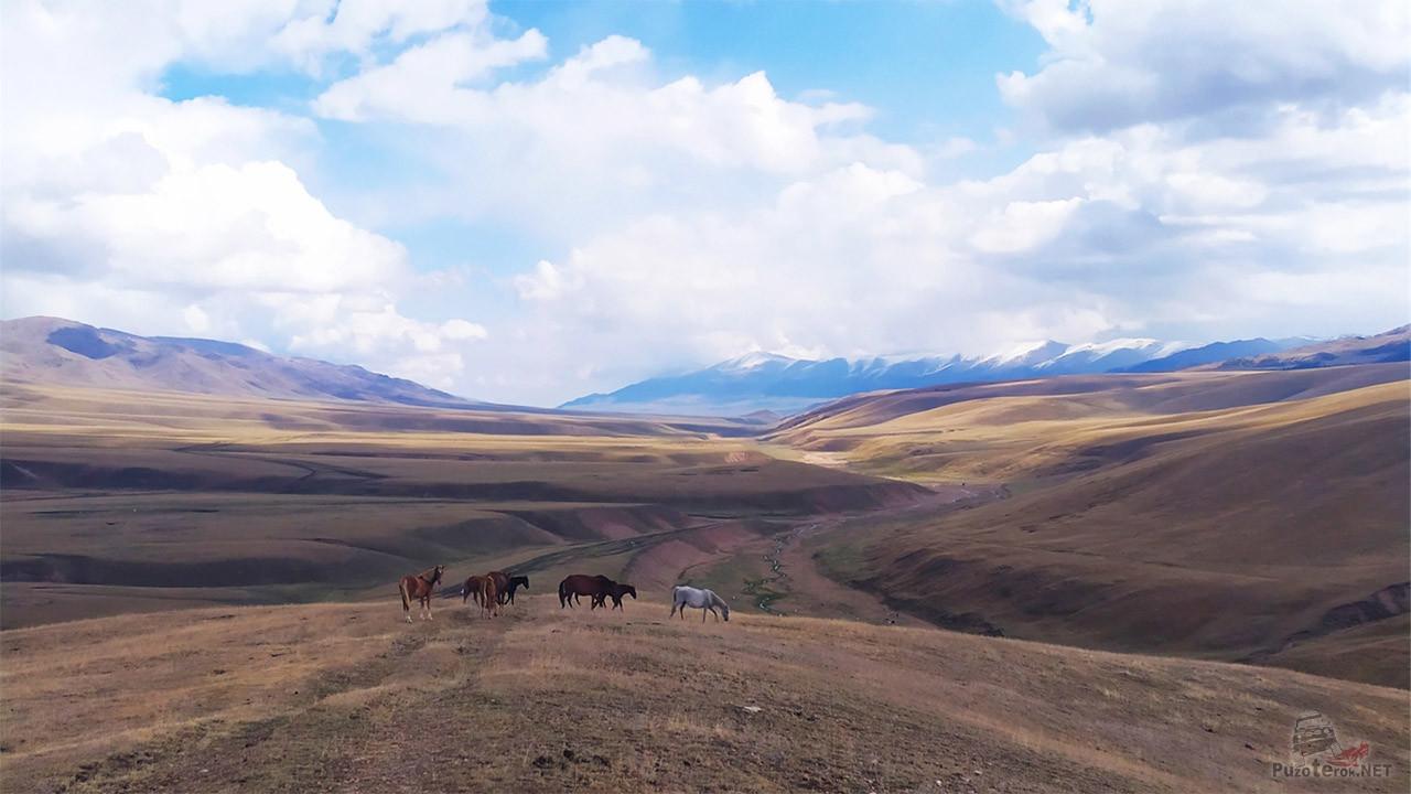 Дикие лошади на панораме плато