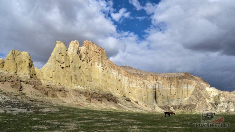 Дикие лошади у подножья скал