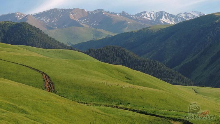 Дорога к снежным вершинам через зелёные луга