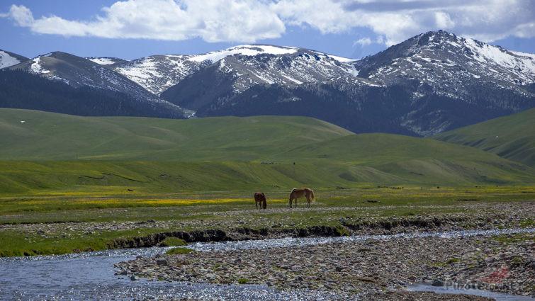Лошадки на берегу речки