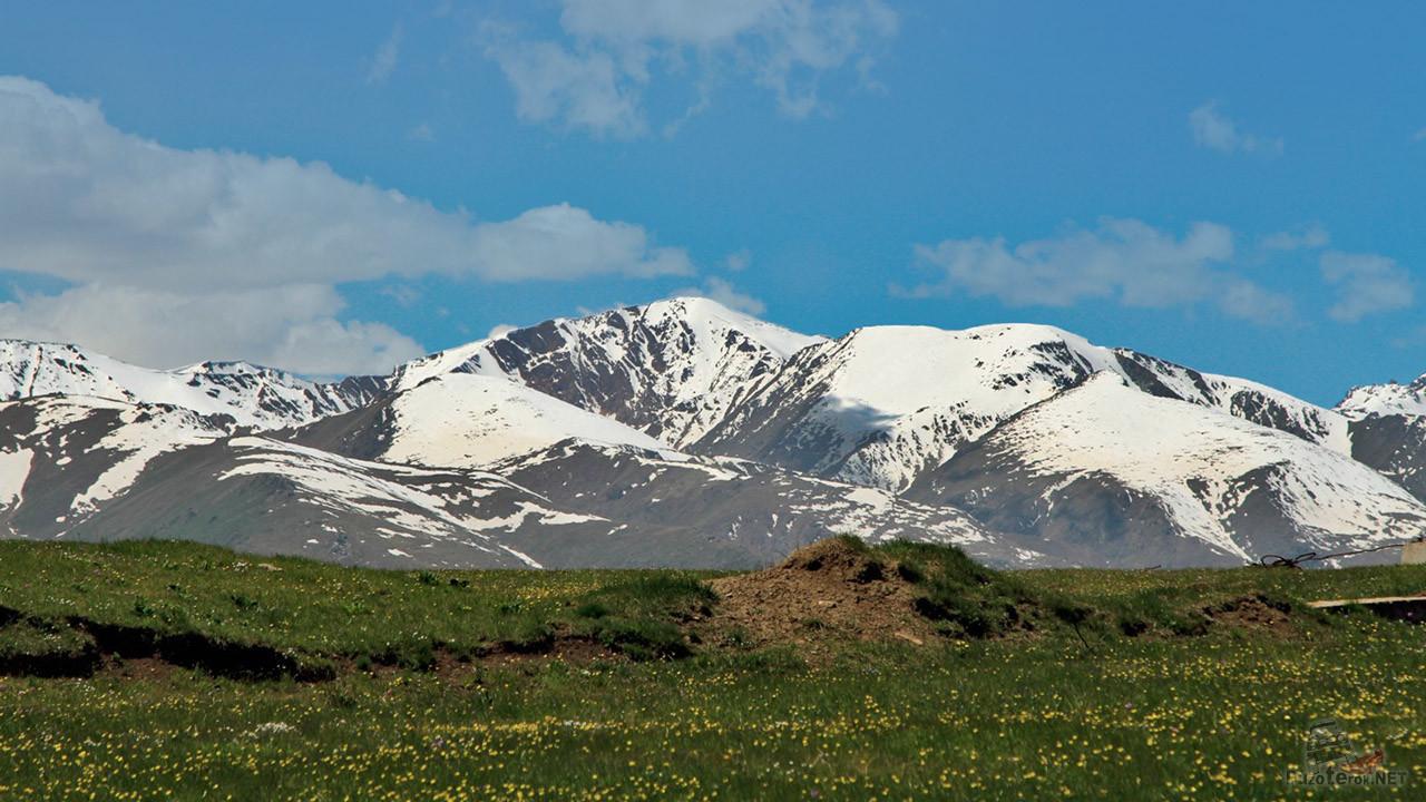 Цветущий луг на фоне снежных пиков