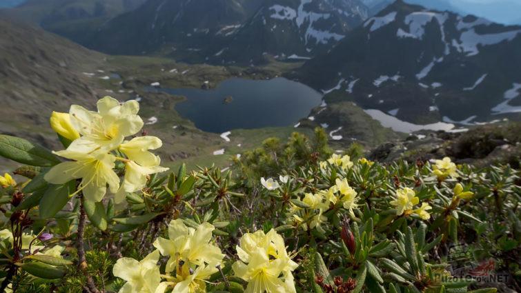 Цветущий весенний заповедник
