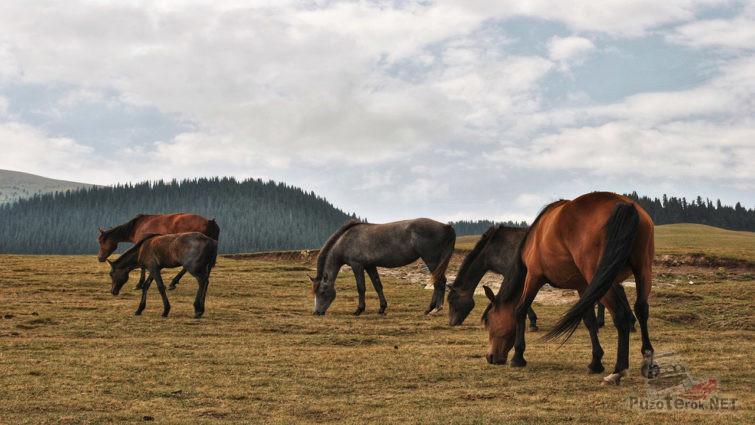 Табун лошадей на пастбище