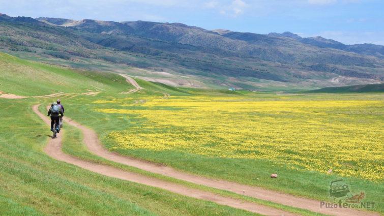 Велосипедисты среди цветущих лугов плато