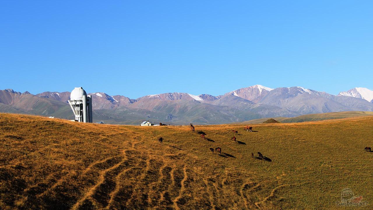 Весеннее пастбище у подножья обсерватории