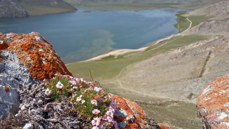Весенние цветы на скалах