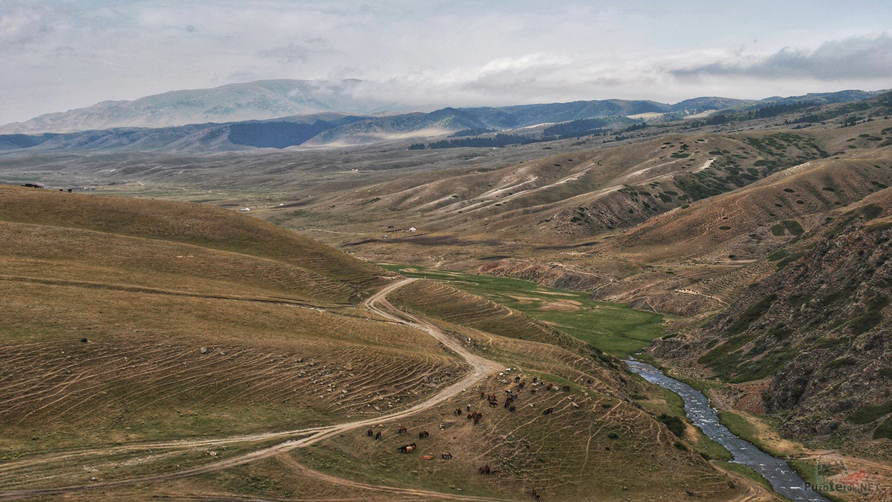 Вид сверху на табун лошадей среди красных скал