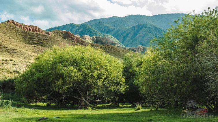 Зелёный сад у подножья красных скал