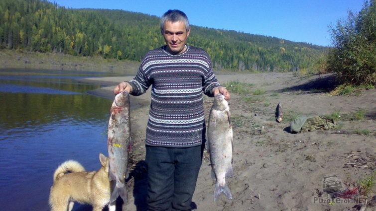 Рыбак с уловом - два пятикилограмовых Чира